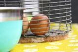 Home Eggs
